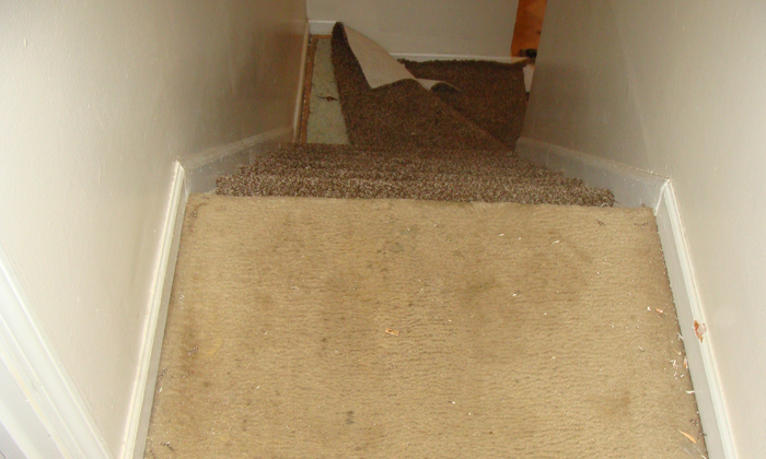 Carpet renovation
